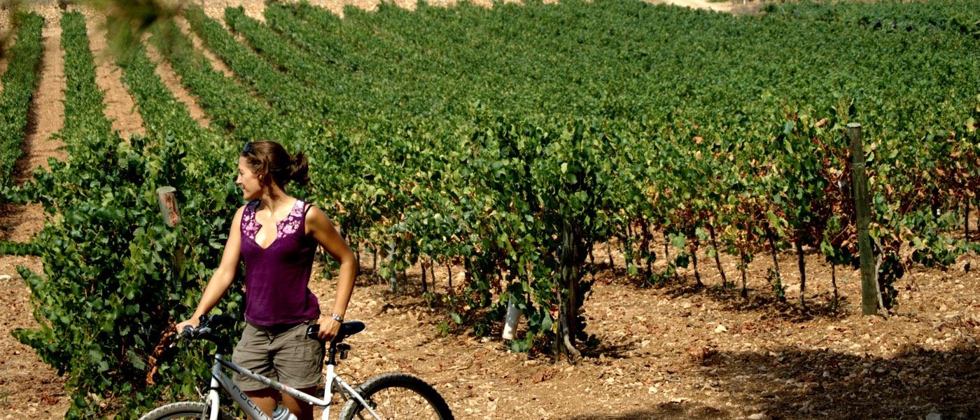 Vin - cykel